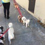 Naha, Simba, Oliver, and Jake on their group walk!